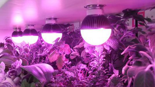 alt-grow-light-a19-globe